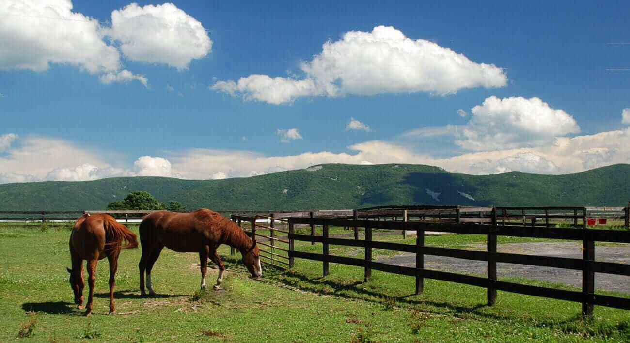 Potential Horse Farm For Sale