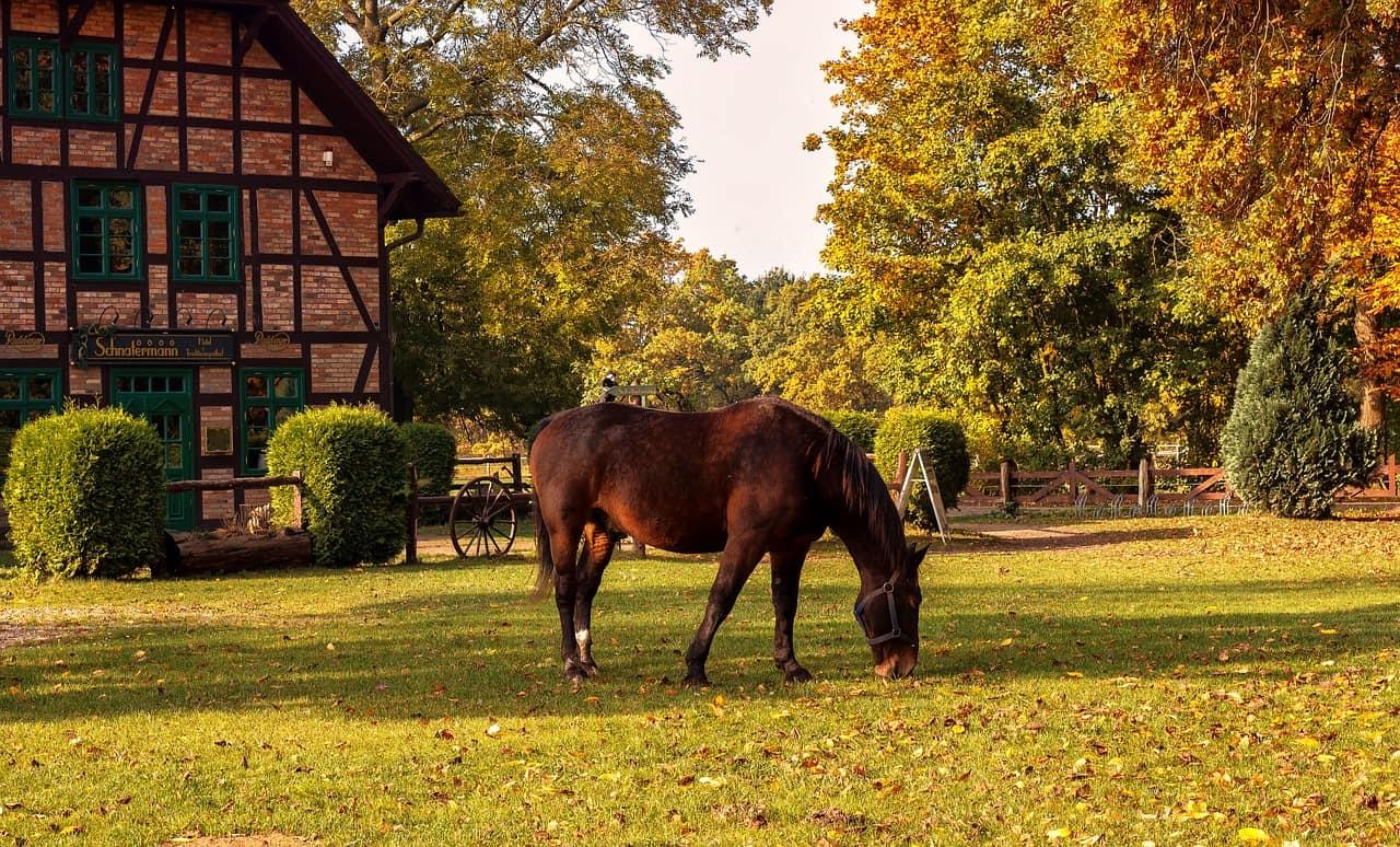 Making your horse farm eco friendly virginia horse for Horse farm